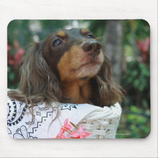 Close-up of a Dachshund dog sitting in a basket Mouse Pad