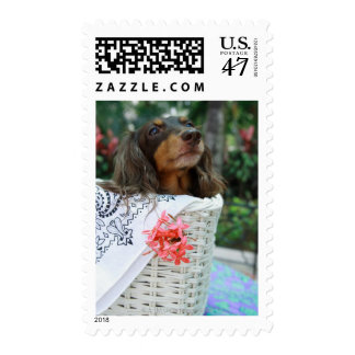 Close-up of a Dachshund dog sitting in a basket Stamp