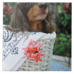 Close-up of a Dachshund dog sitting in a basket Large Square Tile