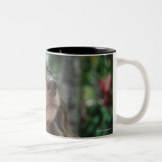 Close-up of a Dachshund dog sitting in a basket Two-Tone Coffee Mug