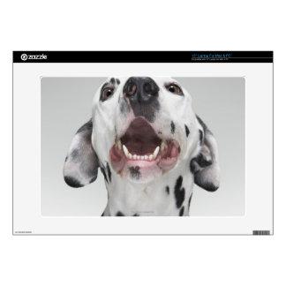 """Close up of a Dalmatian dog 15"""" Laptop Skins"""