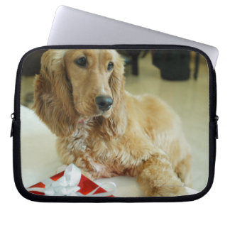 Close-up of a dog with a gift laptop sleeve