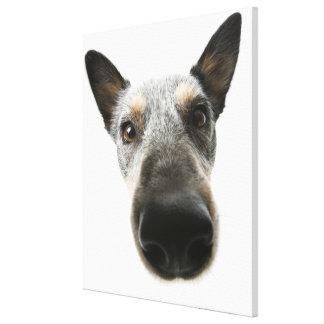 Close-up of a dog's head canvas prints