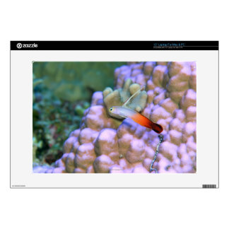 Close up of a fire dart fish, Okinawa, Japan Skins For Laptops