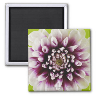 Close-up of a flower 2 magnet