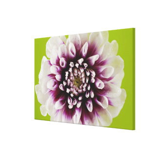 Close-up of a flower stretched canvas prints