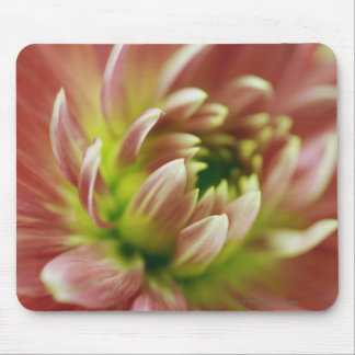 Close-up of a flower mouse pad