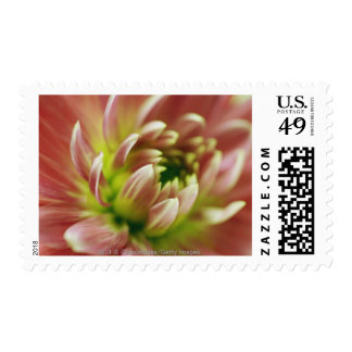 Close-up of a flower postage