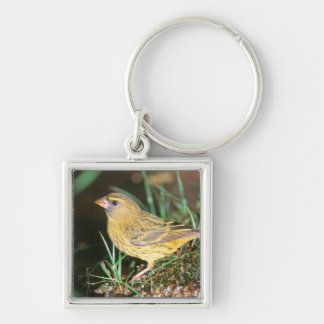 Close-Up Of A Forest Canary (Serinus Scotops) Keychain