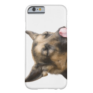 Close-up of a German Shepherd licking its nose Barely There iPhone 6 Case