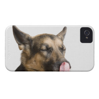 Close-up of a German Shepherd licking its nose iPhone 4 Cover
