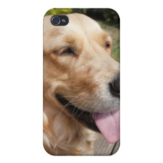 close up of a golden retriever dogs face iPhone 4 covers