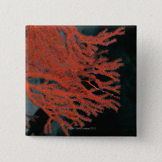 Close-up of a Gorgonian Sea Fan Button