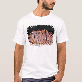 Close-up of a Gorgonian Sea Fan (Subergorgia) T-Shirt
