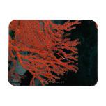 Close-up of a Gorgonian Sea Fan Vinyl Magnet