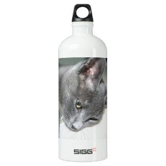 Close Up Of A Grey Kitten Aluminum Water Bottle