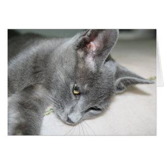 Close Up Of A Grey Kitten Card