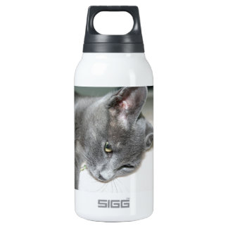 Close Up Of A Grey Kitten Insulated Water Bottle