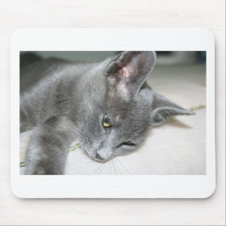 Close Up Of A Grey Kitten Mouse Pad