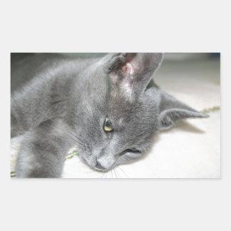 Close Up Of A Grey Kitten Rectangular Sticker