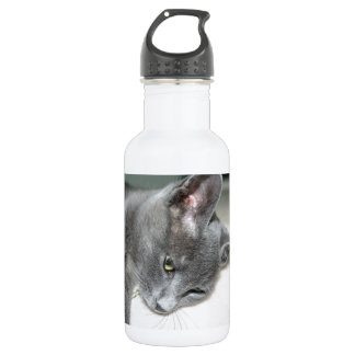 Close Up Of A Grey Kitten Water Bottle
