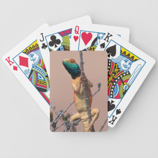 Close-Up Of A Ground Agama (Agama Aculeata) Bicycle Playing Cards