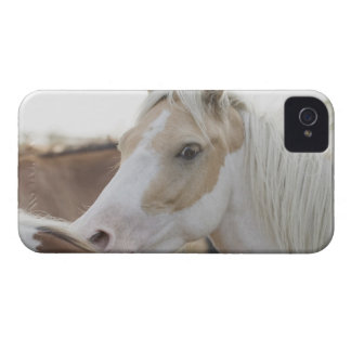 Close up of a herd of horses 2 Case-Mate iPhone 4 case