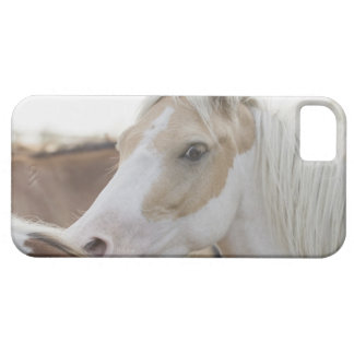 Close up of a herd of horses 2 iPhone SE/5/5s case