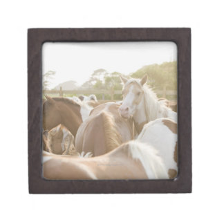 Close up of a herd of horses gift box