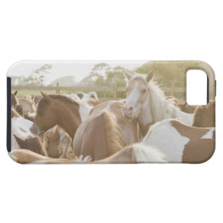 Close up of a herd of horses iPhone SE/5/5s case
