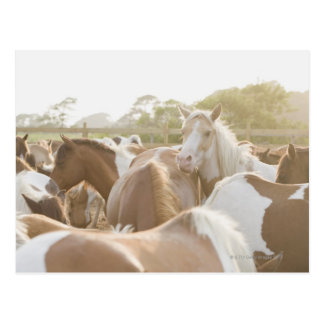 Close up of a herd of horses postcard
