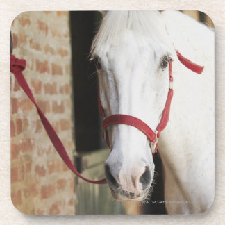 Close-up of a horse 2 beverage coaster