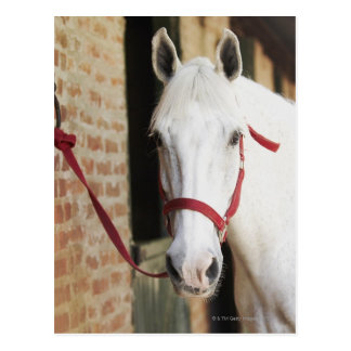 Close-up of a horse 2 postcard