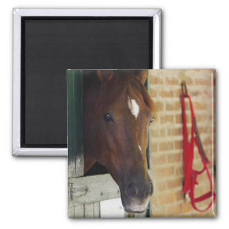Close-up of a horse 3 2 inch square magnet