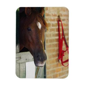 Close-up of a horse 3 rectangular photo magnet