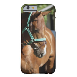 Close-up of a horse 4 barely there iPhone 6 case