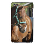 Close-up of a horse 4 Case-Mate iPod touch case