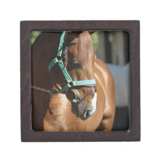 Close-up of a horse 4 gift box