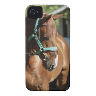 Close-up of a horse 4 iPhone 4 case