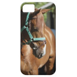 Close-up of a horse 4 iPhone SE/5/5s case