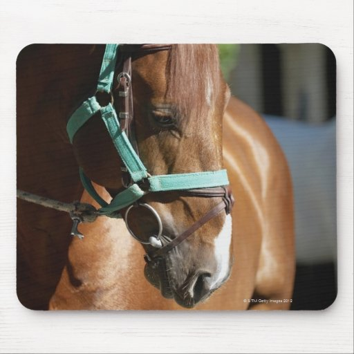 Close-up of a horse 4 mouse pad
