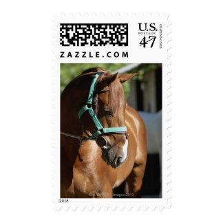 Close-up of a horse 4 postage
