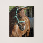 Close-up of a horse 4 puzzle