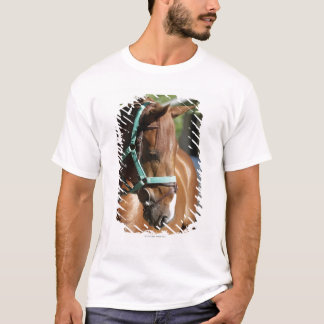 Close-up of a horse 4 T-Shirt