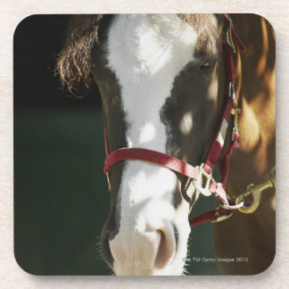 Close-up of a horse drink coaster
