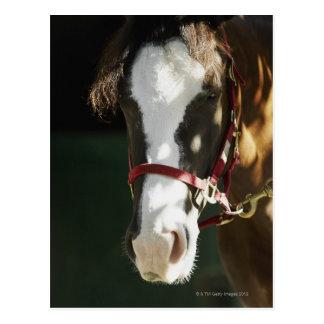 Close-up of a horse postcard