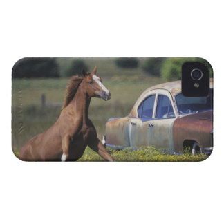 Close-up of a horse running near a car on a iPhone 4 case