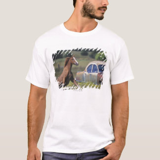 Close-up of a horse running near a car on a T-Shirt