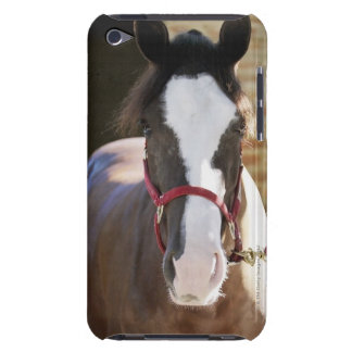 Close-up of a horse tied in a stable barely there iPod cover