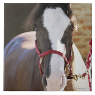 Close-up of a horse tied in a stable ceramic tile